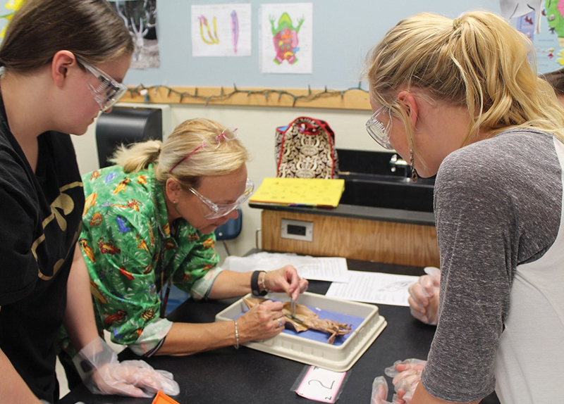 Should Students Stop Dissecting Animals?