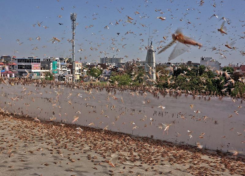 The Worst Locust Invasion in Decades0