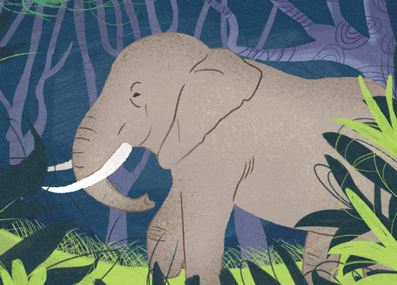 Elephant Crisis in Central Africa - World Features