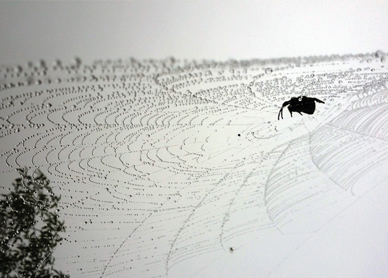 Scientists Use Lasers To Shape Spider Silk - The IT World of Tomorrow