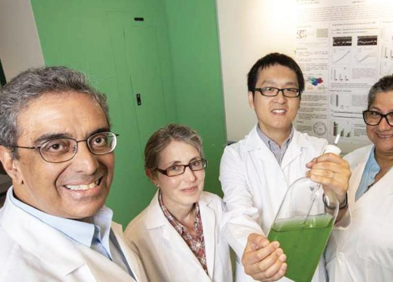 Researchers Create Fertilizer From Air - Explore the Idea