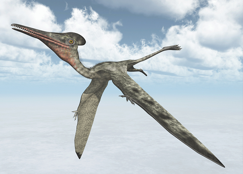 The World's Oldest Pterodactyl Fossil - World Features