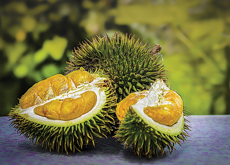 Plane Grounded Over Durian Furor - World Features