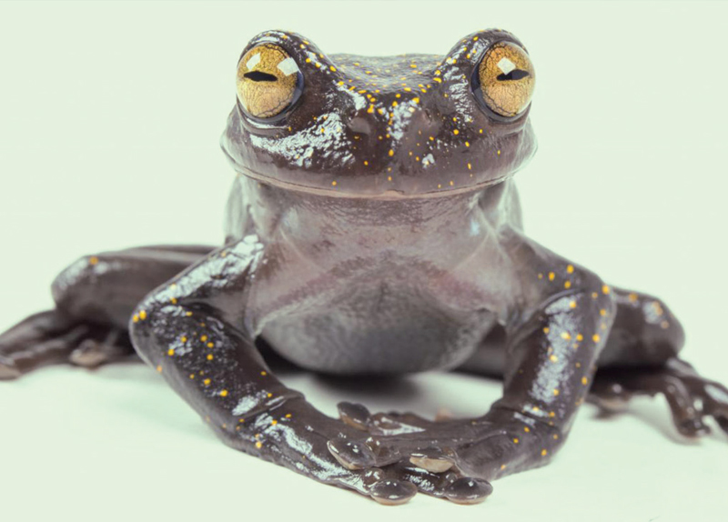 Frog With Claws Found In Ecuador - World Features