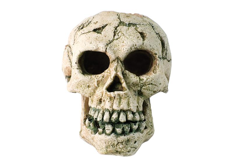 Ancient Skulls Show America Was a Prehistoric Melting Pot - World Matters