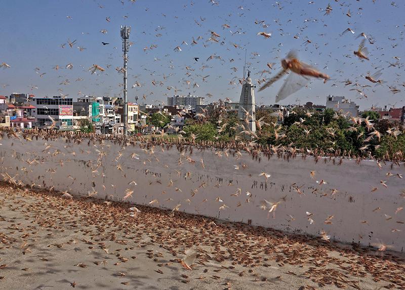 The Worst Locust Invasion in Decades - World Features
