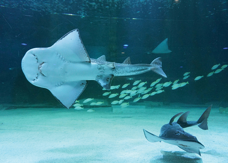 Strengthening the Rights of Aquarium Animals - Hot News