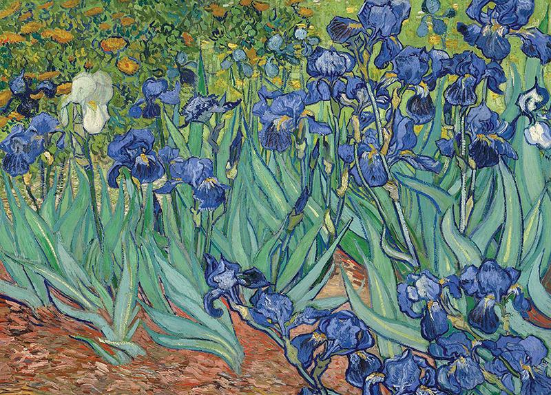 Irises - Arts